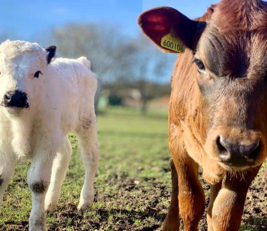 White Post Farm plans to reopen on April 12